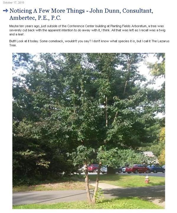 Lazarus Tree  -  Part Two